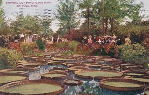 Minnesota St Paul Tropical Lily Pond In Como Park 1909