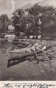 Pond Lillies at Brewer's Dam, Freeville, New York,PU-00-10s