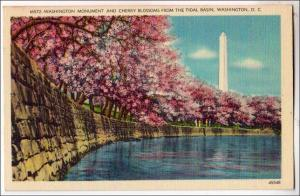 Washington Monument & Blossoms, Washington DC