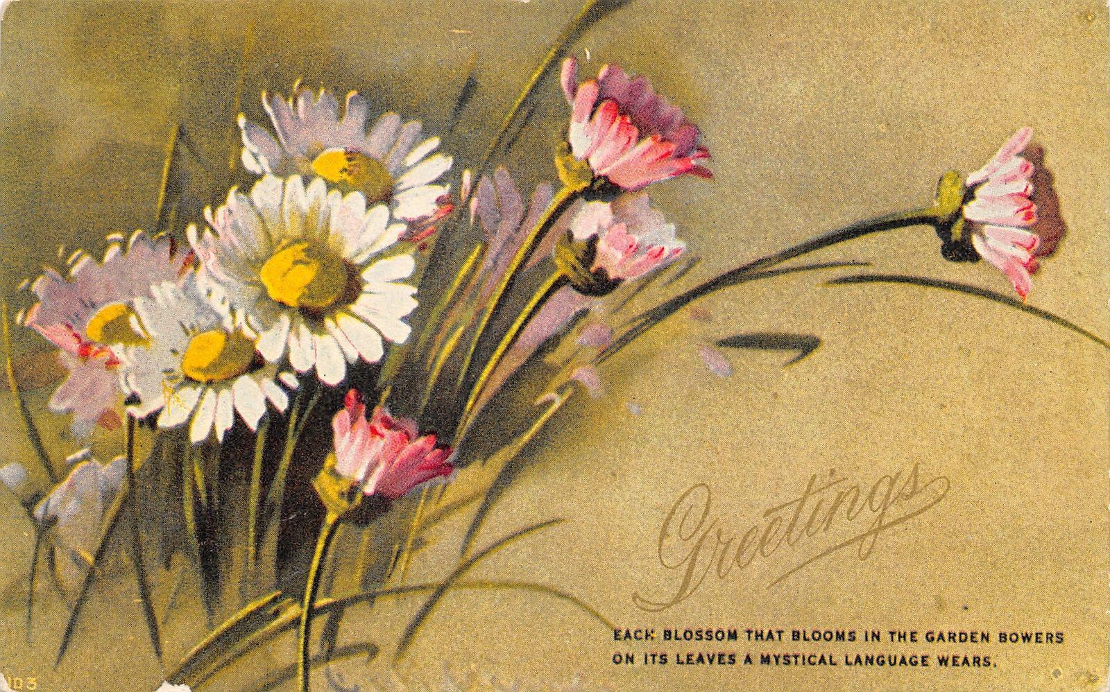 Catherine kleinpink white daisies in fieldmystical flower listing izmirmasajfo