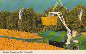 Florida Oranges By The Truckload