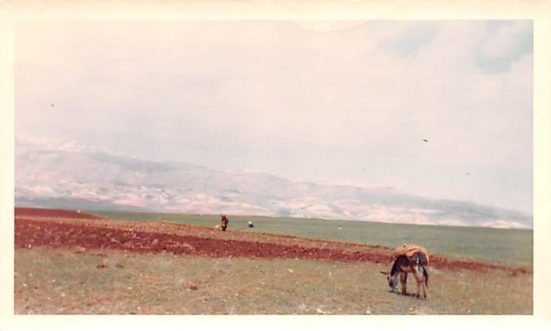 Ablah, Lebanon Postcard, Carte Postale Fertile Valley along way to Ruins at B...