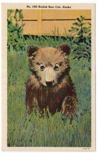 Kodiak Bear Cub, Alaska