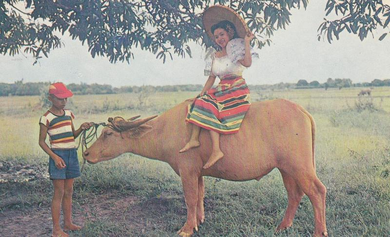 Filipina Balintawak Costume Carabao Pony Philippines 1962 Postcard