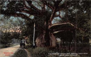 KINGSTON JAMAICA~TOM CRINGLES COTTON TREE~SPANISH TOWN RD~DUPERLY PUBL POSTCARD