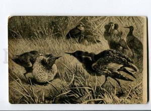 258462 Russia Birds HUNT Vintage photo postcard