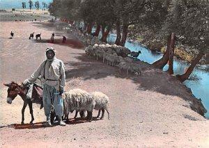 Shepard Shepherd, Lebanon , Carte Postale Unused
