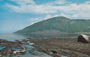 Scenic view,  Mont-St-Pierre, Gaspesie,  Quebec,  Canada,  40-60s