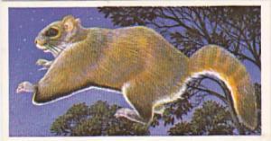 Brooke Bond Vintage Trade Card Incredible Creatures 1986 No 35 Flying Squirrel