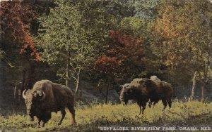 OMAHA, Nebraska, 1900-1910s; Buffaloes, Riverview Park