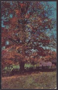 Autumn Scene,Howard City,MI Postcard BIN