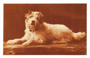 Nostalgia Postcard c1910 King Edward VII Dog Caesar Fox Terrier Repro Card NS24