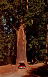 California Redwood Highway Underwood Park Chandelier Drive-Thru Tree