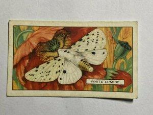 CIGARETTE CARD - GALLAHER BUTTERFLIES & MOTHS #31 WHITE EMRINE    (UU284)