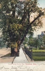 CLEVELAND, Ohio , PU-1906 ; Scene along Euclid Avenue