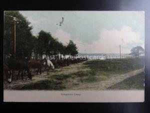 Military Hampshire LONGMOOR CAMP showing Line of Horses Grazing c1904 Postcard