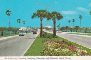 Florida Clearwater/Clearwater Beach Palm Lined Causeway