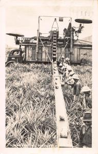 Harvesting Pineapple in Hawaii, Early Real Photo Postcard, Used in 1948