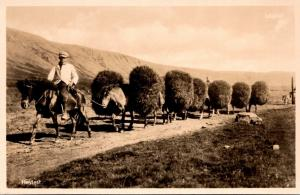 Iceland Heylest Typical Hay Train Real Photo