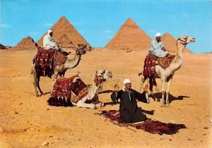 Egypt Giza Arab Camelriders in front of the Pyramids
