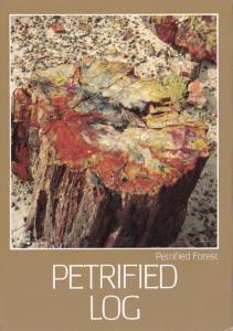 Arizona Petrified Forest Petrified Log