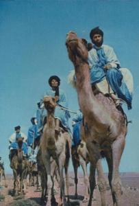 Morocco The Blue Men Camel Riders Postcard
