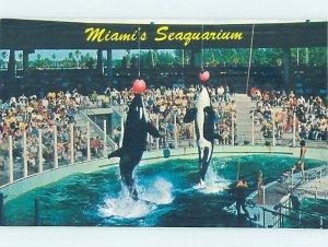Pre-1980 SEAQUARIUM SCENE Miami Florida FL AF9519