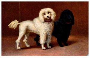 Dog  Poodles