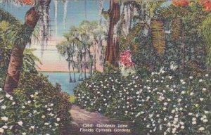 Florida Cypress Gardens Gardenia Lane Florida Cypress Gardens 1949 Artvue