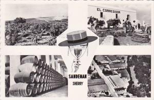 Spain Jerez Saandeman Vineyards and Bodegas Real Photo