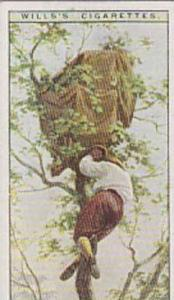 Wills Vintage Cigarette Cards Life In The Tree Tops Series No. 50 Observation...