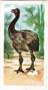 Trade Cards Brooke Bond Tea Prehistoric Animals No. 32 Aepyonis