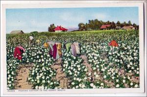 Picking Cotton