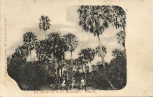 bolivia, Un Palmar en el Rio Pilcomayo, Palm Trees (1899) De Notta & Co Postcard