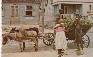BARBADOS, PU-1972; The Tropical Caribbean, Native Coconut Vendor, Donkey-pull...