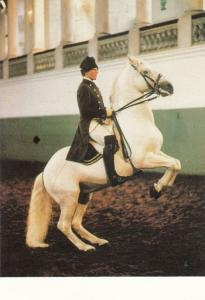 Horse Rearing Levade Spanish Riding School Of Vienna Postcard