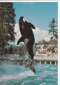 Skana the Killer Whale , Vancouver, B.C. , Canada , 60-80s #2