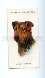 166927 WELSH TERRIER WARDLE Player CIGARETTE card ADVERTISING