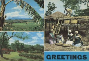 Malawi Tribe African Greetings Postcard
