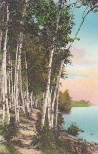 Minnesota Birches in Superior National Forest of Minnesota Albertype