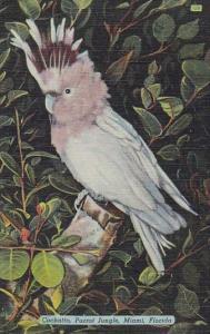 Florida Miami Cockatto Parrot Jungle