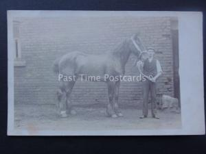 Working Horse & Proud Stable Hand (2) early 1900's RP Postcard