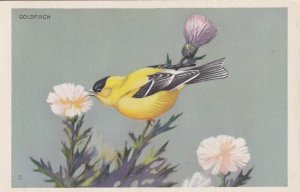 GOLDFINCH bird perched on flowers, National Wildlife Federation, 1939