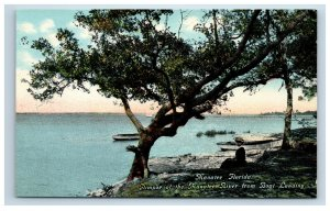 Early Manatee Florida FL River from Boat Landing Postcard