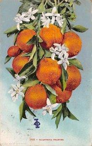 Fruit Assorted California Oranges California, USA 1906