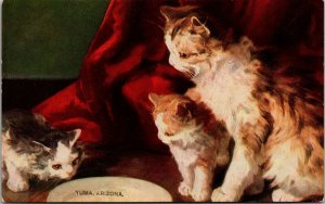 Yuma , Arizona - Vintage - CATS -  Postcard