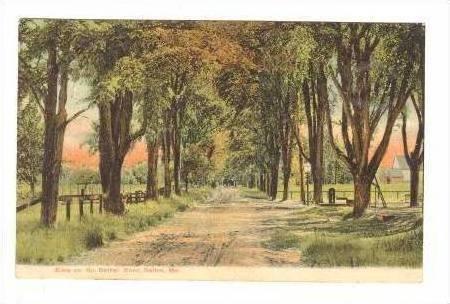 Elms Lining North Bethel Road, Bethel, Maine, 1909