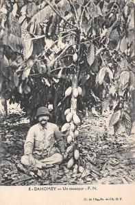 Dahomey Benin Un cocaoyer cacaoyer cocoa