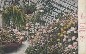 CHICAGO, Illinois, PU-1916; Interior, Lincoln Park Conservatory