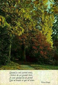 Belgium Forest Autumn Road Promenade Victor Hugo Postcard